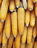 Dried corn background Stock Photo