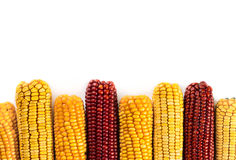 Dried corn background Royalty Free Stock Images