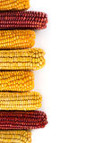 Dried corn background Stock Photography