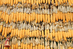 Dried corn background Royalty Free Stock Photos