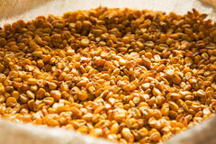 Dried corn in a bag. Grain yellow maize harvested is stored in the bag Royalty Free Stock Image