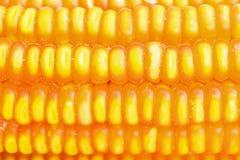 Dried corn closeup Stock Images