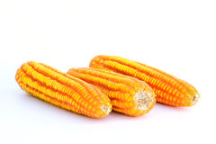 Dried corn closeup . Stock Photography