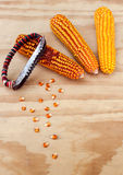 Dried corn cobs with hand tools to clean the grains of maize Stock Photo