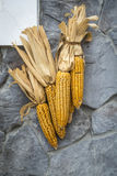 Dried corn cobs Royalty Free Stock Photography