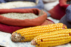 Dried corn cobs in a  market Stock Photo