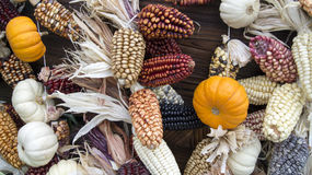Dried Corn, Garlic and Pumpkin Royalty Free Stock Images