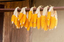 Dried corn Royalty Free Stock Images