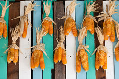 Dried corn hung on colorful wooden wall Stock Photos