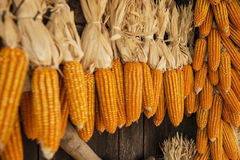 Dried corn hung up outside rural house in Thailand Stock Image