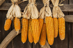 Dried corn hung up outside rural house in Thailand Royalty Free Stock Image
