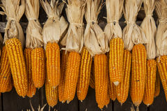 Dried corn hung up outside rural house in Thailand Royalty Free Stock Photography
