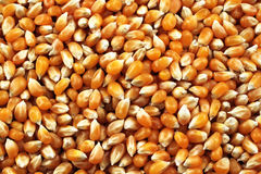 Dried Corn Kernels Macro Royalty Free Stock Images