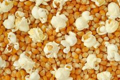 Dried corn kernels and popped popcorn Royalty Free Stock Photos