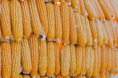The Dried corn Royalty Free Stock Images