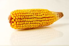 Dried Corn with Reflection Stock Photography