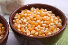Dried corn seeds Royalty Free Stock Photos