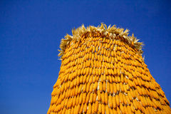 Dried corn situated mid sunlight , healthy organic nutrition , abstract backgrounds Stock Photo