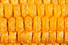 Dried corn on stalk Stock Image