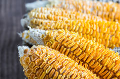 Dried Corn Stalk in basket Royalty Free Stock Photo