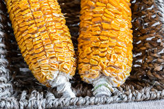 Dried Corn Stalk in basket Stock Photography