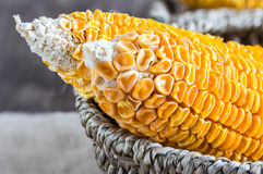 Dried Corn Stalk in basket Royalty Free Stock Photography