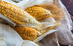 Dried Corn Stalk in basket on wood table Royalty Free Stock Image