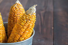 Dried Corn Stalk in bucket Royalty Free Stock Images