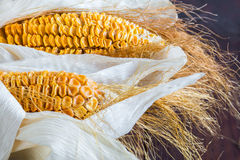 Dried Corn Stalk Stock Photo