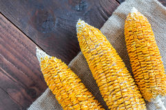 Dried Corn Stalk on wood table Royalty Free Stock Photography