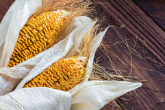 Dried Corn Stalk on wood table Stock Image