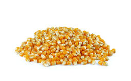 Dried corn on white background Stock Photography