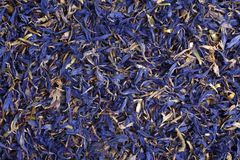 Dried cornflower tea, for backgrounds or textures stock photography
