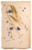 Dried cornflowers and corn on aged paper Stock Images