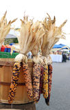 Dried corns for Halloween decoration Royalty Free Stock Images