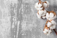 Free Dried Cotton Plant Flower On Old Grey Background. Close-up, Copy Space. Royalty Free Stock Photo - 109213305