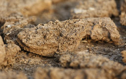 Dried cow dung Stock Photo