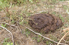 Dried cow dung on dry grass, compost, fertilizer Stock Photo