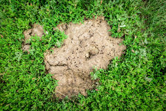 Dried Cow Pat Stock Image
