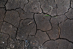 Dried crack soil ground texture Stock Image