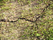 Dried cracked dirt  Stock Photography