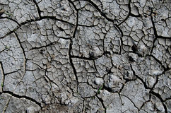 Dried cracked earth Stock Photo