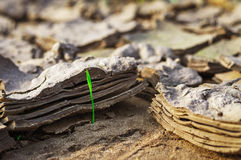Dried and cracked earth, earth texture Royalty Free Stock Images