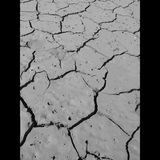 Dried and cracked earth. Royalty Free Stock Photography