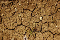 Dried and cracked soil Stock Image