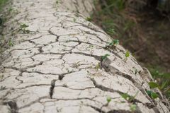 Dried cracked soil, effects of climate change. Dried cracked soil pathway on a field, rice field paths, climate change, irrigation royalty free stock images