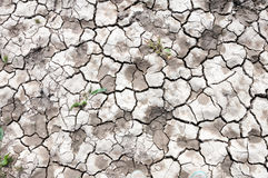 Dried cracked soil Stock Photo
