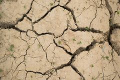 Dried cracked soil with a small plants royalty free stock photography