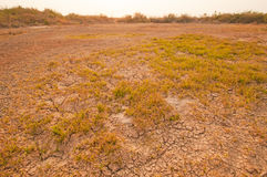 Dried and cracked soil Royalty Free Stock Photos