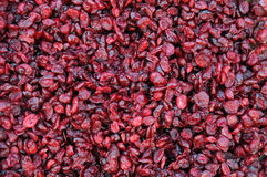 Dried cranberries Stock Image